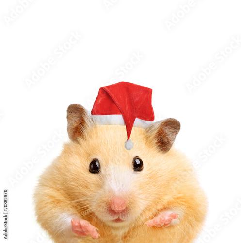 Foto op Canvas Dragen Christmas hamster