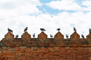 pigeons and doves on spires of castle wall
