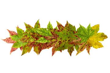 colorful arrangement of leaves
