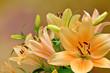 Bukiet pomarańczowych lilii