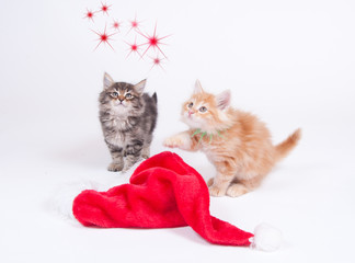 Katzenbabys/Weihnachten