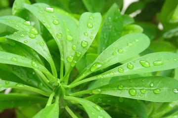Green Foliage and rain drops