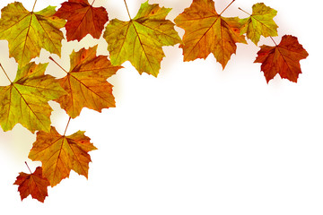 autumn maple leaves edging - platanus I