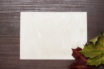 some autumn leaves and blanck old photo background