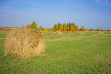 Autumn Landscape with hay rolls.