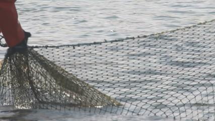 industrial catch salmon
