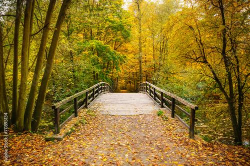 fototapeta na ścianę Most w lesie jesienią