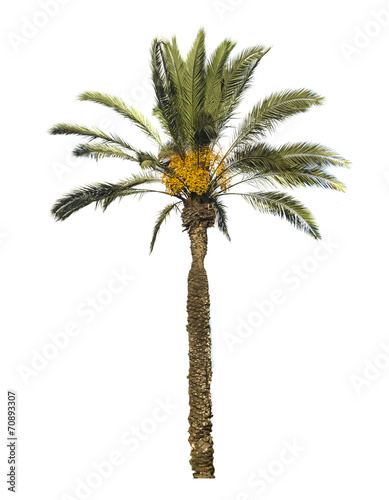 Plexiglas Palm boom Date palm