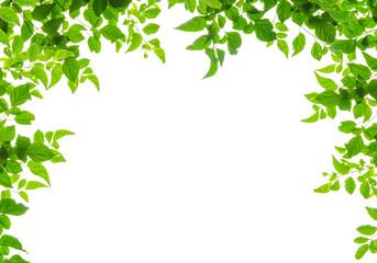 green leaf fream