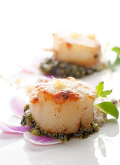 Scallops shells with thai basil pesto
