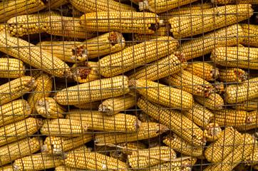 gabbia per la raccolta del grano turco