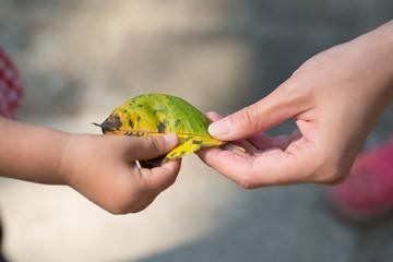 落ち葉を手渡す親子の手