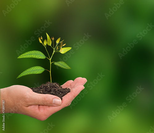 canvas print picture Sapling in hand