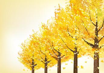 イチョウ 並木 Golden trees in late autumn