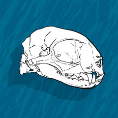 Animal skull with shadow on blue background
