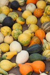 green and orange pumpkins  on sale at the market