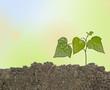 canvas print picture - Growing plant