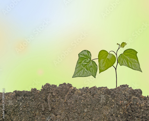 canvas print picture Growing plant