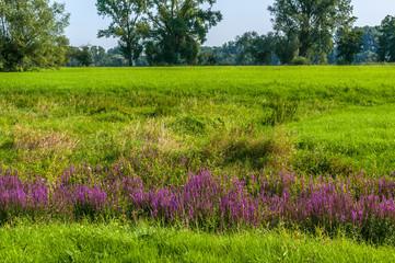 Landschaft  am Niederrhein