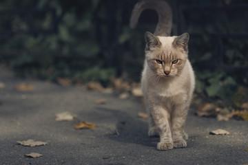 Ash kitten!