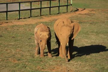 Elefantes, Cabárceno, Santander. Cantabria