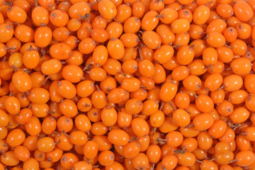Seabuckthorn as background texture