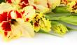 Fresh colorful gladiolus isolated \ horizontal