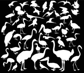 large set of white bird silhouettes on black