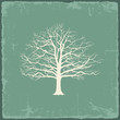 Old bare tree on vintage paper. Vector illustration - 70902148