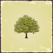 Old tree on vintage paper. Vector illustration - 70902154