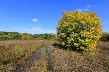 autumn on meadow