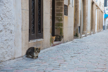 Three cats sit outside the stone house