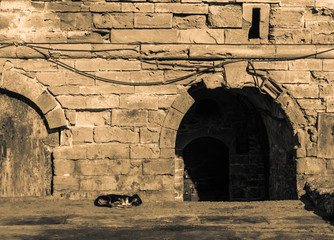 A dog sleeps on the floor in front of the entrance of the stone