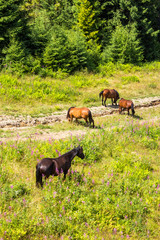 Horses by the road at the forest edge