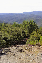 Nature in the mountains of the Cevennes