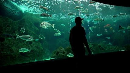 Big aquarium and people silhouette