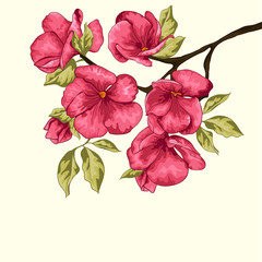 Cherry blossom. Sakura flowers. Floral background. Branch with p