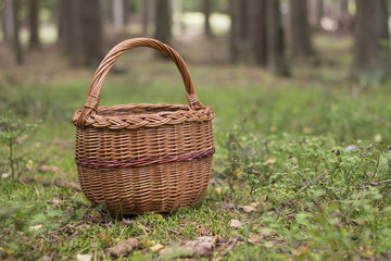 Wicker basket in a forest