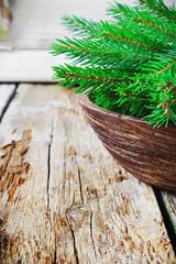 green branches of fir