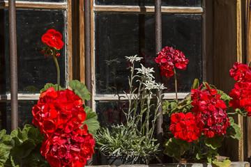 Blumenschmuck am Fenster