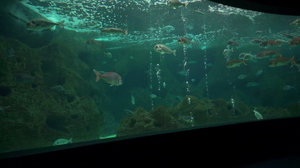 Big aquarium. Fish in deep blue water.