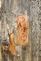 Love concept. Drawing on tree