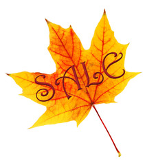 Sale concept. Yellow maple leaf isolated on white