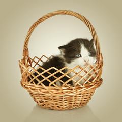 Two little kittens. Cat sitting in basket