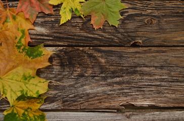 Blätterhintergrund