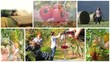 agriculture montage, people, animals and products
