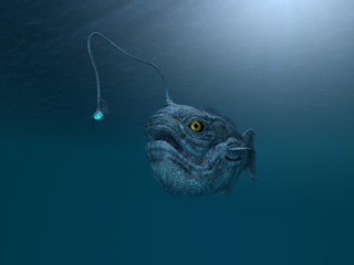 ancient angler fish
