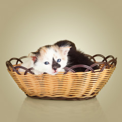 Two little kittens. Cat sitting in basket