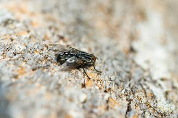 La mosca posada en el tronco