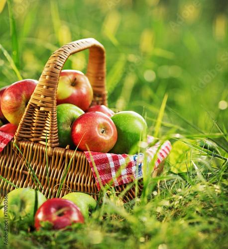 mata magnetyczna Bogate organiczne jabłka w koszu na zewnątrz. Jesień żniwa